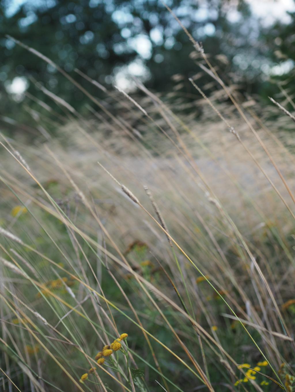Tuulessa heiluvat kesäheinät